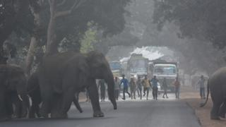 elephants crossing a road in Orissa
