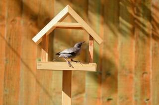 in_pictures Bird table