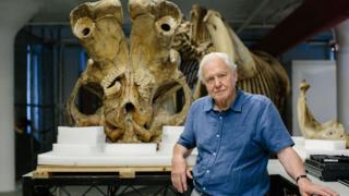 David Attenborough frente al cráneo de Jumbo Foto: Humble Bee Films