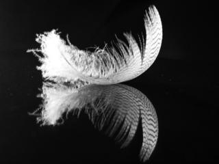 in_pictures Feather