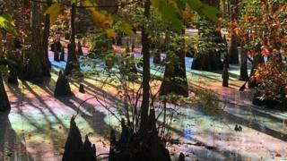 Allison Goz took this photo of a rainbow swamp at First Landing State Park in Virginia
