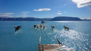 Stefen Olsen snimio je ovu fotografiju ovog leta na Grenlandu
