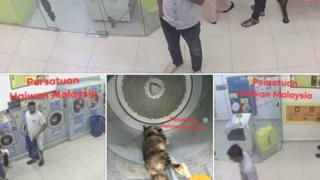 Collage of men in laundrette and dead cat in dryer