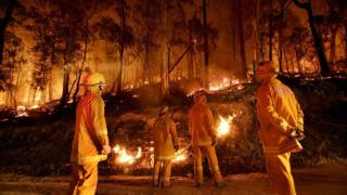 Firefighters burning brush to prevent forest fires