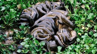 _97531680_snake6.jpg