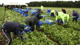 çiftçiler