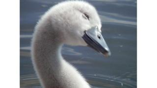 This little fellow looked like he was smiling at me while I was walking in Strathclyde park Motherwell.