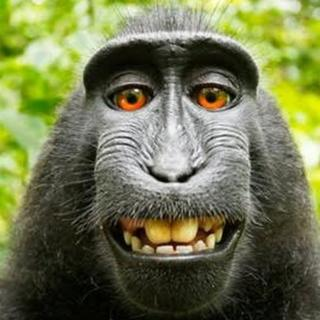 Selfie taken by macaque money in Indonesia in 2011
