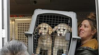 A crate holding two puppies rescued from a South Korean dog meat farm arrives in New York (26 March 2017)
