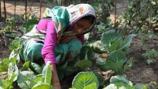 방글라데시에서 농사를 짓는 여성