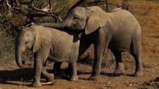 Ndovu 9 wauawa na umeme nchini Botswana