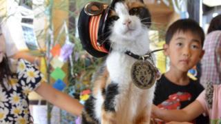 القطة التي أنقذت خطا للسكك الحديدية في اليابان