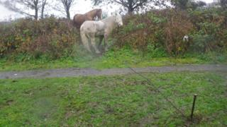 The tethered horses