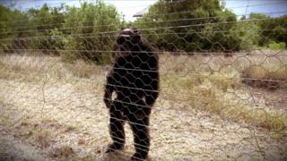 チンパンジーのポコ