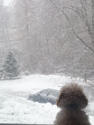 Dog looking through window at heavy snow in Feshiebridge