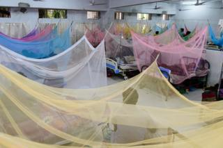Rows of beds in a hospital covered in mosquito nets