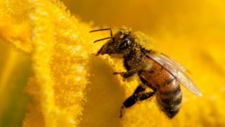 Без пчел наш мир погибнет за несколько лет