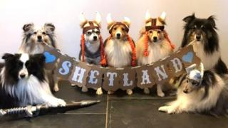 in_pictures Dogs dressed as Vikings