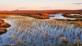 Flow Country work to restore vital peatland
