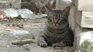 Mèo hoang ở Bangkok thường không phải lo kiếm mồi