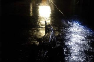 Crocodile on driveway in Townsville, Australia