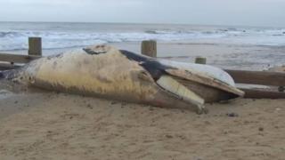 The whale on the beach
