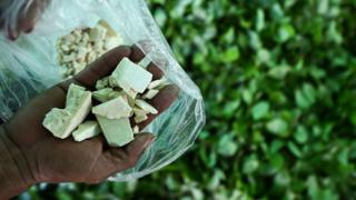 coca crop