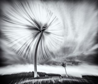 Черно-белая фотография парка ветротурбин, сделанная в импрессионистическом стиле