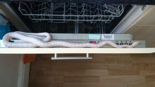 The corn snake in the dishwasher