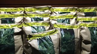 Bags of Cannabis