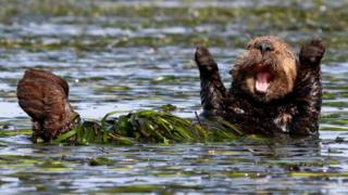 Happy Sea Otter