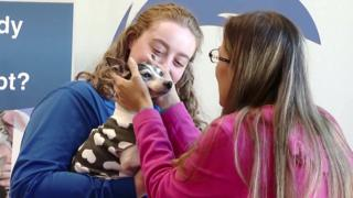 animals Dutchess the fox terrier reunites with her owner Katheryn Strang