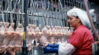 کشتارگاه مرغ در ایالت آرکانزاس آمریکا