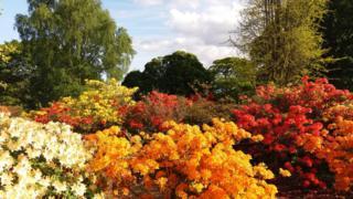 Flores de varios colores