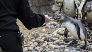 Child feeding penguin