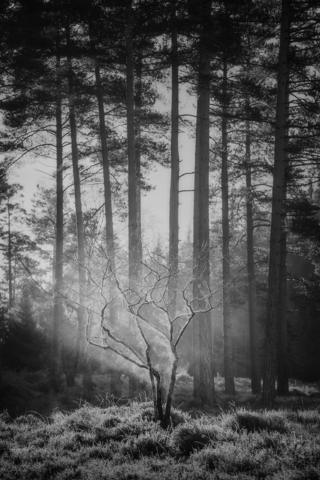 A bare tree is illuminated in a spotlight in the forest