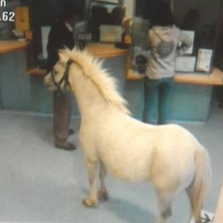 Pony at A&E department