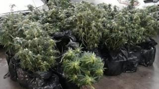 Worksop cannabis plants flood