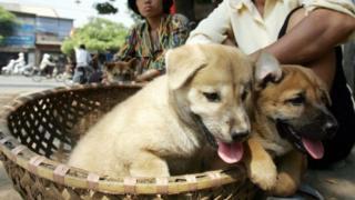Việt Nam, thịt chó