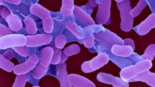 The Indian companies battling drug-resistant superbugs