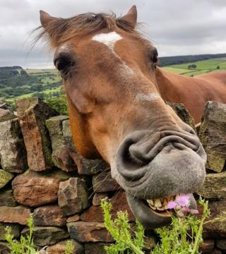 A horse eating a plant