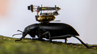 science A beetle with a camera on its back