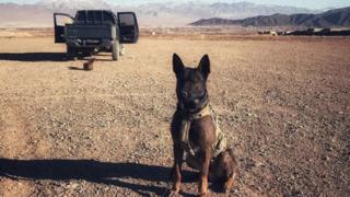 animals Military dog Kuno