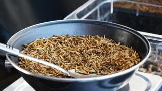 Uma panela repleta de larvas