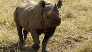 A black male rhinoceros is seen at a game farm in Malelane 30 September 2004