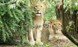 File pic Motshegetsi, left, and Majo in a zoo in Leipzig earlier this month