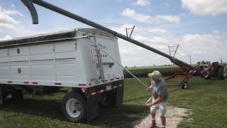 US farmer loads soybeans onto lorry - 13 June