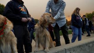 Пес на поводке с местным жителем