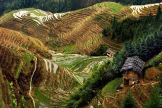 A view of farming terraces on the side of a hill