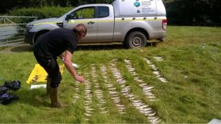 Officers counting the dead fish